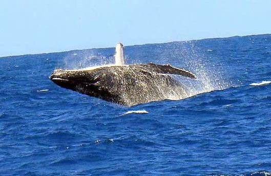 Baleias em Porto Seguro